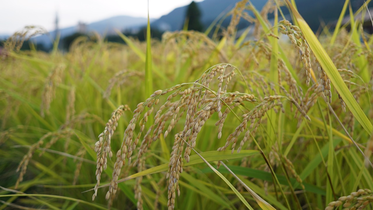 江戸時代の農民の階層 地主・自作農・小作農