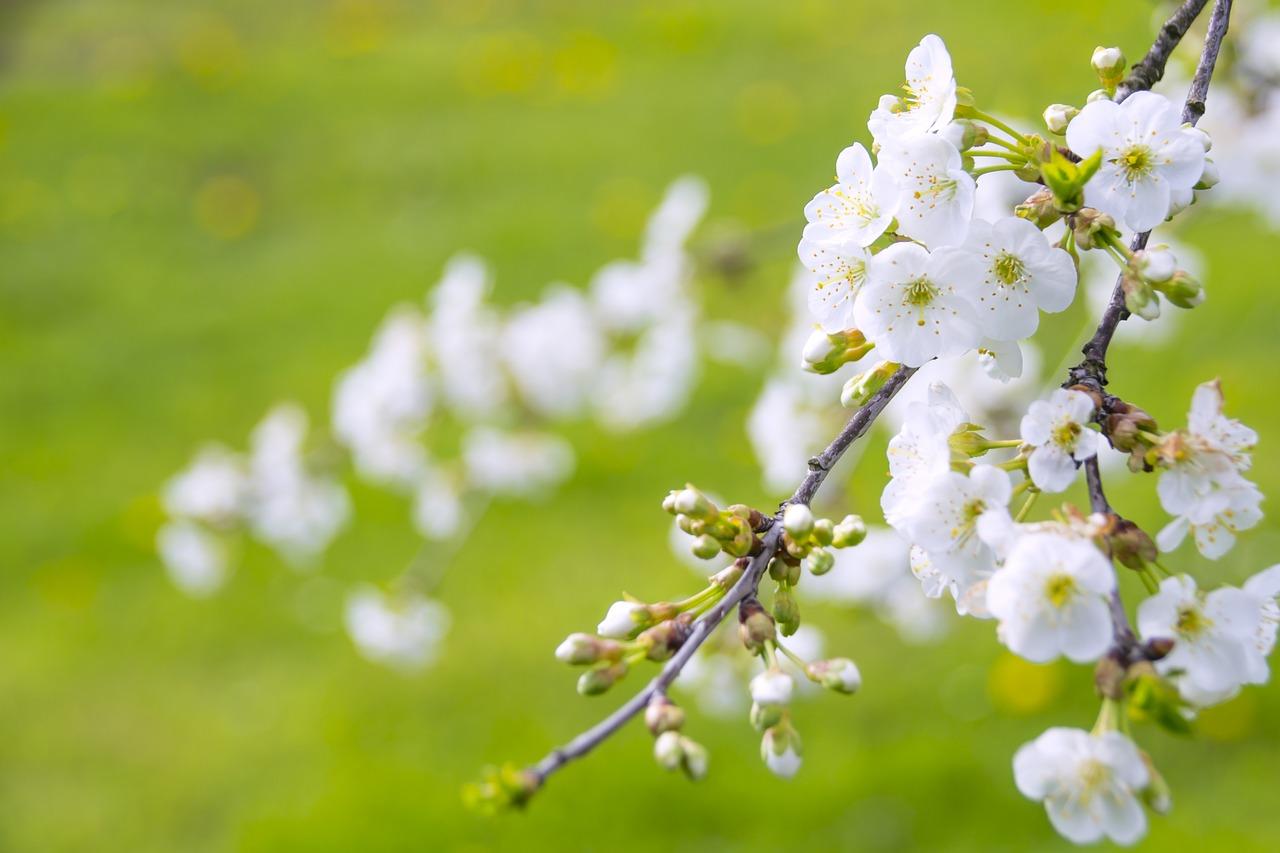 江戸時代の農民・町人が苗字を持っていた事について