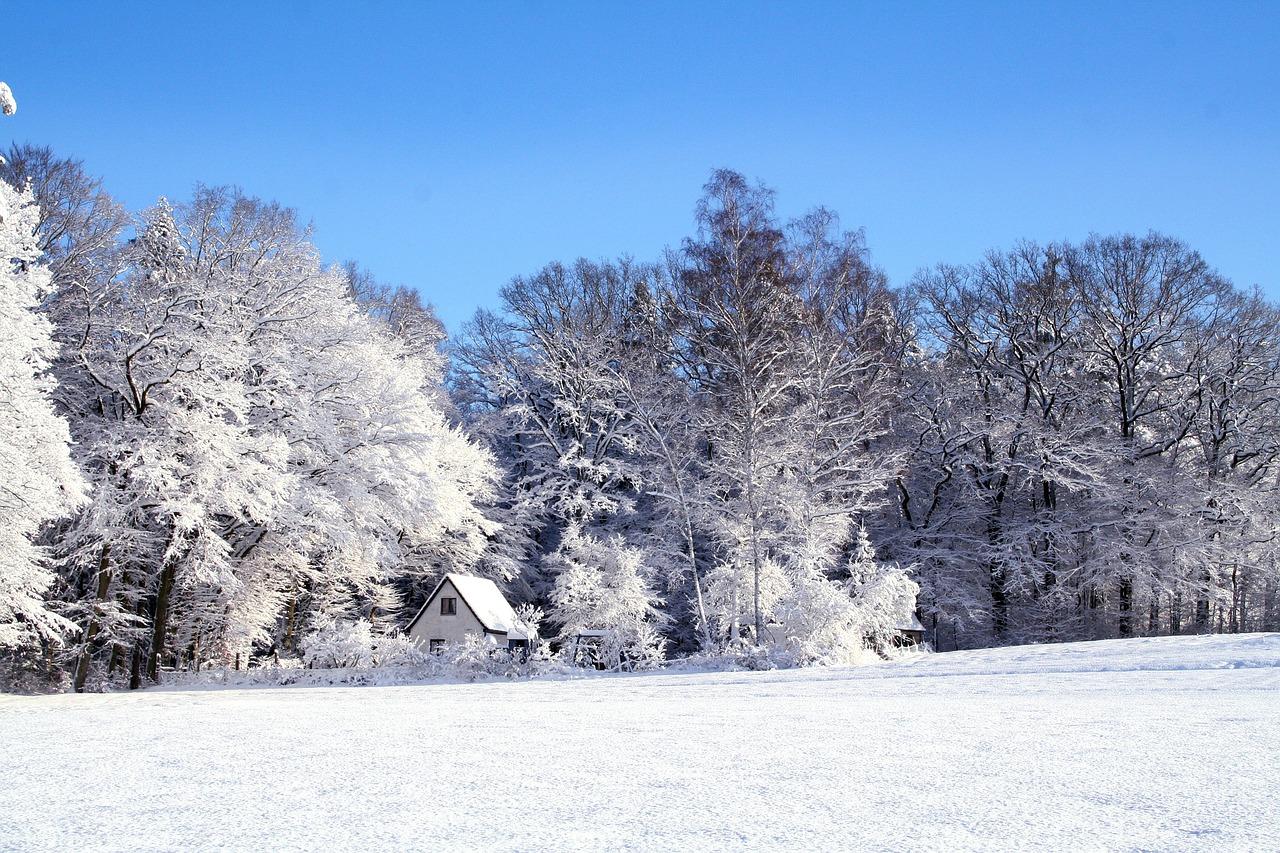 モト冬樹の実家は産婦人科で巣鴨?父親・母親・兄弟や家族、本名は?