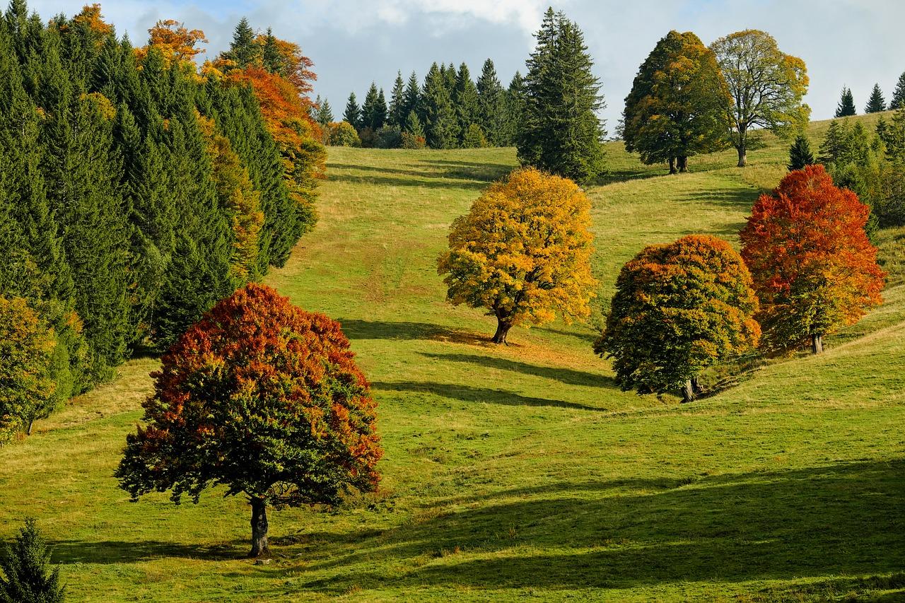 for Immagini autunno hd